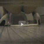 無料動画 コンパニオンのトイレ盗撮